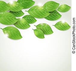 Falling fresh green leaves