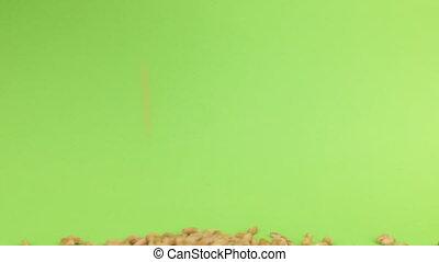 Falling grains wheat on heap of wheat on a green screen
