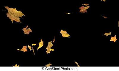 Falling leaves - alpha