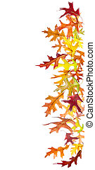 Falling Leaves Border - Colorful autumn leaves border...