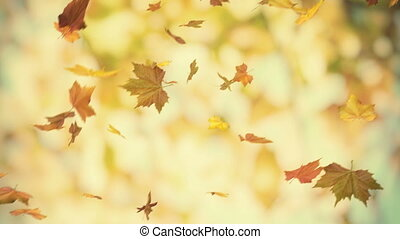 falling leaves - looped and masked