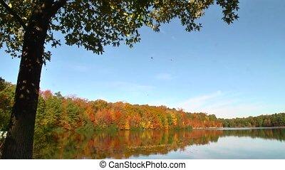 falling leaves on lake