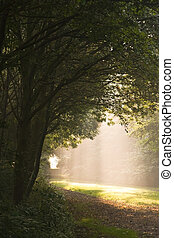 Falling light through the trees on a misty Septembermorning