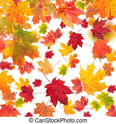 Falling maple leaves isolated on white background