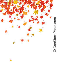 falling maple leaves