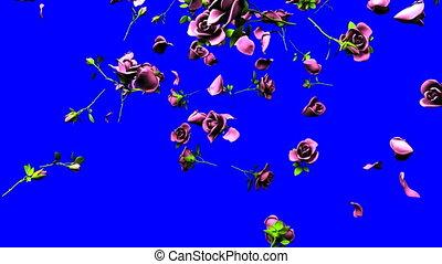 Falling pink roses on blue chroma key. 3DCG render...