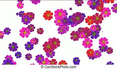 falling purple daisy flower and wildflower, wedding background.