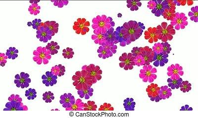 falling purple daisy flower and wildflower, wedding background.