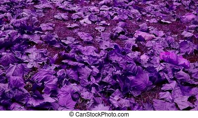 falling purple leaves full