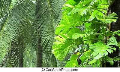 falling rain in tropical jungle