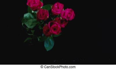 Falling red rose in slow motion HD