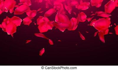 Falling Rose Petals on black background. Seamless loop