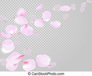 Falling rose petals soft delicate pink blossom on transparent background. Sakura cherry flying flowers. 3d realistic design. Vector illustration