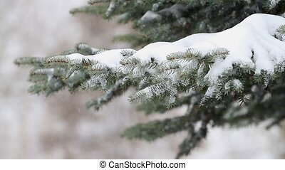 Falling snow and a pine branch in winter