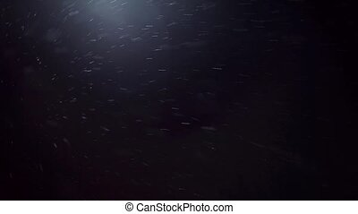 Falling snow at night. Snowflakes on black background, snowflakes fly in the camera