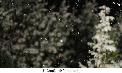 Falling snow at night