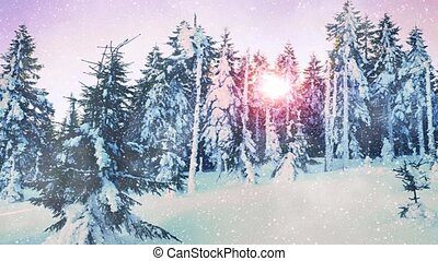 Falling snow in a winter forest with snow covered trees....