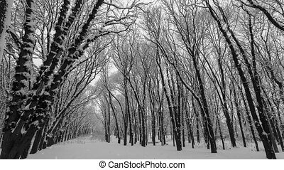 Falling snow in a winter park with snow covered trees