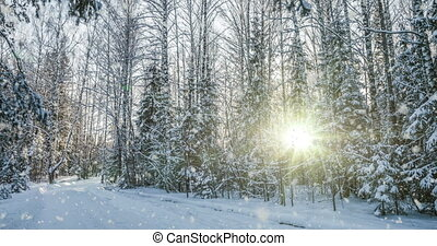 Falling snow in the winter forest, CINEMAGRAPH, loop, 1080p