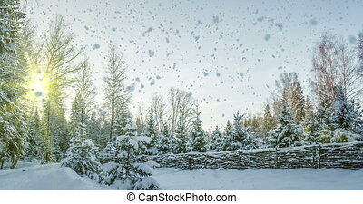 Falling snow in the winter forest, CINEMAGRAPH, loop