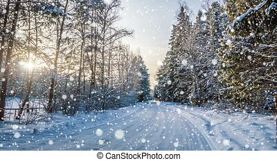 Falling snow in the winter forest,