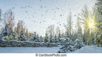 Falling snow in the winter forest, CINEMAGRAPH, loop -...