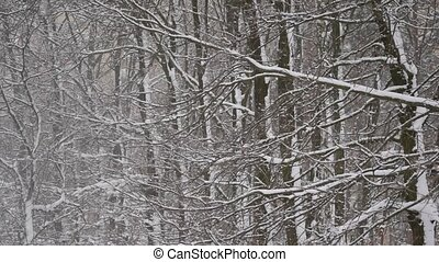 Falling snow in winter on background of a deciduous forest -...