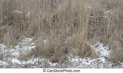 Falling snow on a background of dry grass on the field
