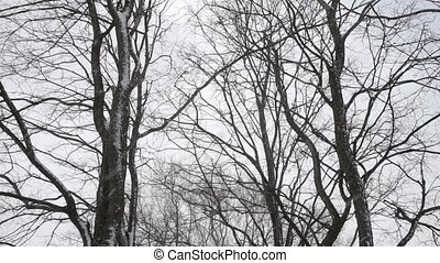 Falling snow on the background of trees