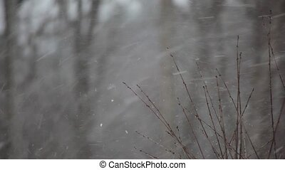 Falling snow - Snow is falling against a blurry background....