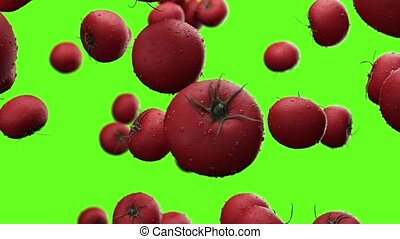Falling tomatoes with water drops on a green background