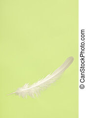 Falling White Feather