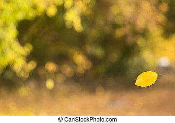 Falling yellow aspen leaf
