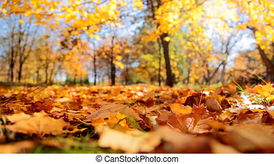 Falling yellow Leaves