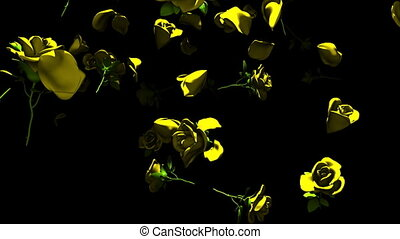 Falling Yellow Roses On Black Background. 3DCG render...