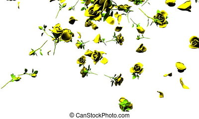 Falling Yellow Roses On White Background. 3DCG render...