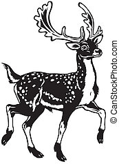 fallow deer black white