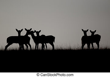 Fallow deer, Dama dama, group silhouetted on skyline, Kent, September 2010