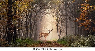 Fallow deer in a dreamy forest scene - Fallow deer standing...