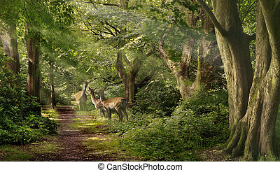 Three Fallow Deer looking alert for danger, in a forest in Staffordshire, England.