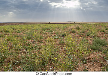 Fallow field in an agricultural landscape in Ciudad Real Province, Spain