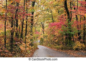 fall's, ομορφιά