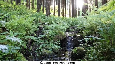 Falls on the small mountain river in a forest - Falls on the...