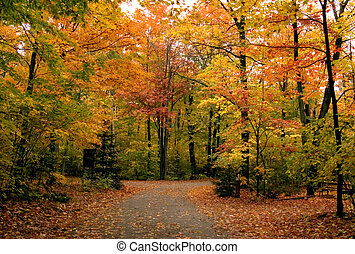 Falls trees - Path in maple forest near George Lake. ...