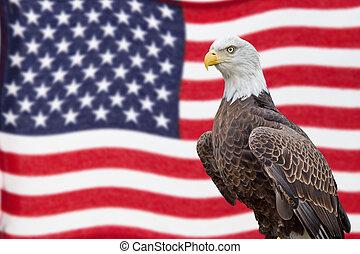 falować, orzeł, bandera, łysy, amerykanka