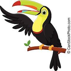 falować, sprytny, tukan, ptak, rysunek