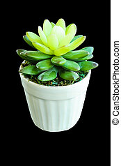 false cactus plant made by rubber tree in white pot isolated on black background with clipping path