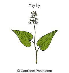 False Lily of the Valley, medicinal plant