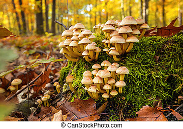 False mushrooms in the autumn forest