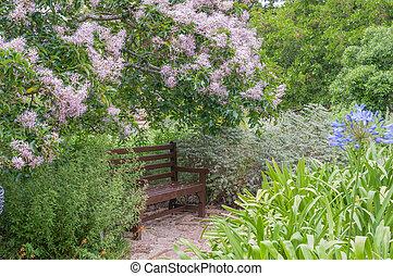 falusias, bírói szék, alatt, egy, virágzás, köpeny, gesztenye fa